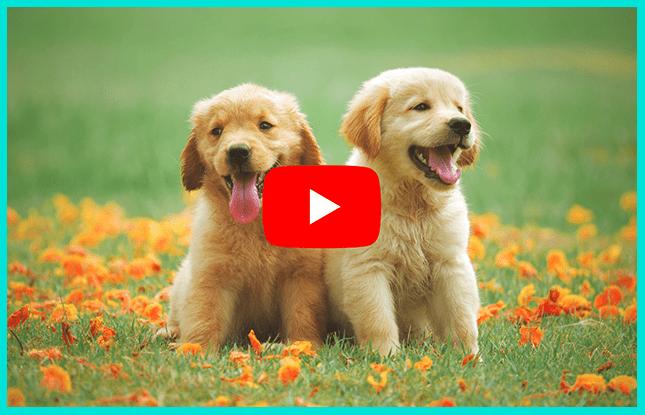 Как назвать Ютуб канал про животных